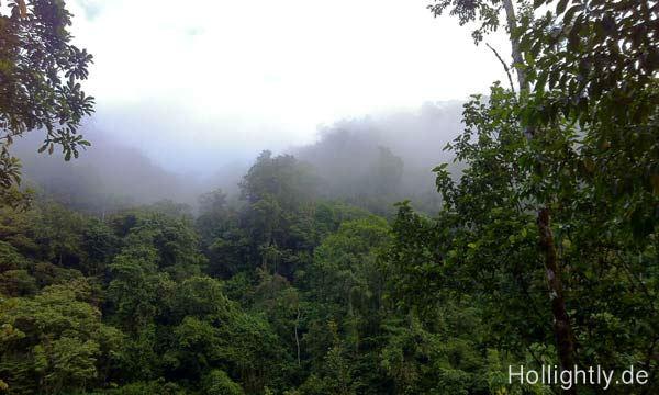 Bild-vom-Dschungel