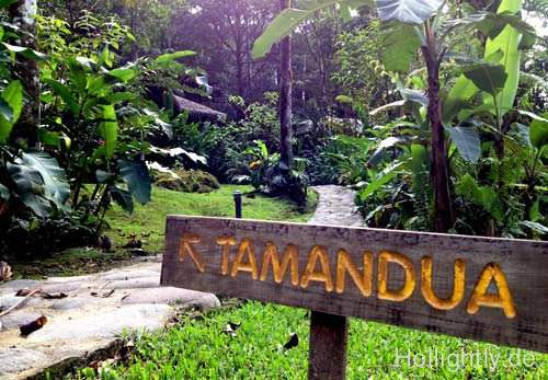 Tamadua-Lodge