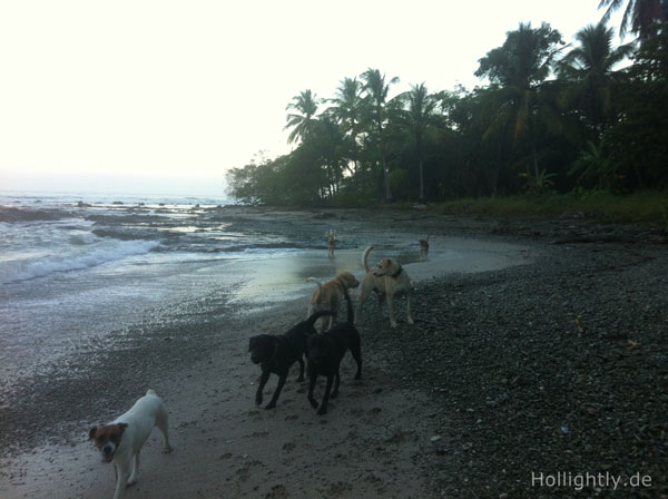 Hunde Costa Rica