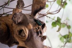 Hollightly-Gross-Okandjou-Namibia-6