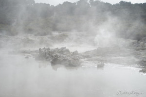 Hells Gate Neuseeland Nebel