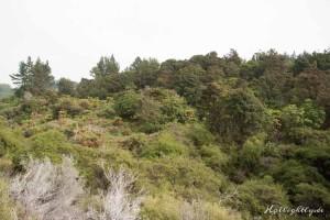 Hells Gate Neuseeland Wald
