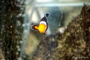 Nemo sais Hello