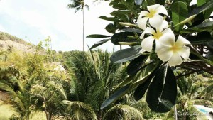 Blüten im Tongsai Bay